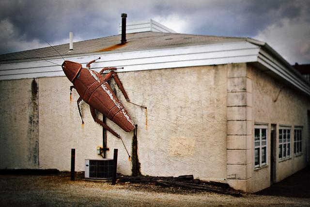 Large cockroach sculpture on building