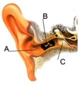 ушная пробка