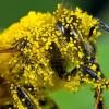 свойства пыльцы