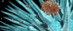 bakterii-646x275