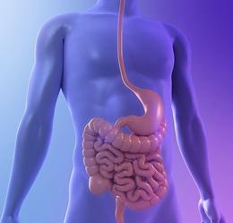 Healthy digestive system, artwork