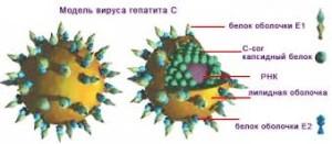 гепатит с схема