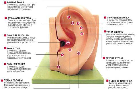 массаж ушей