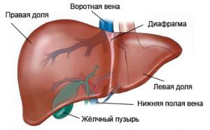 Болезнь желчевыводящих путей или печени