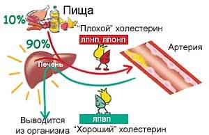 snizit-holesterin-za-tri-mesyaca1